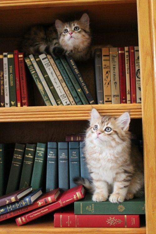 chatons livres