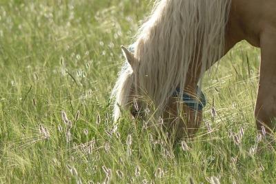 Mongolie Khentii cheval mongol étalon steppe