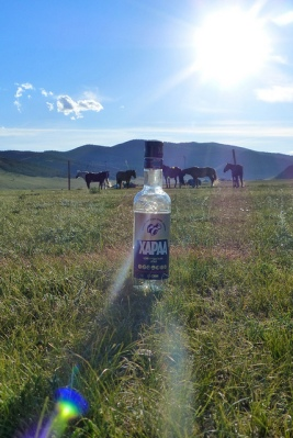 Mongolie Khentii steppe chevaux vodka