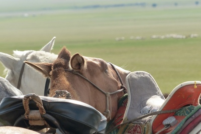 Mongolie Khentii cheval mongol selle traditionnelle