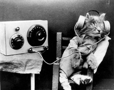 chat avec des écouteurs