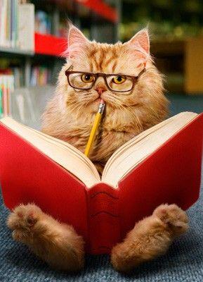 chats intello livres