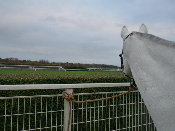 Hippodrome Longchamp 2011