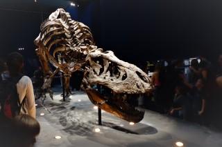 Un T Rex à Paris