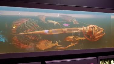 Expo Océans une plongé insolite Museum d'Histoire naturelle aout 2019